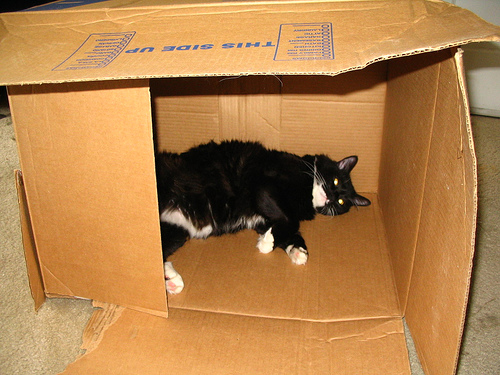 Box with cat